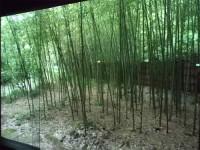 若州一滴文庫の竹林